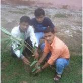 Plantation – 20 Aug 2011